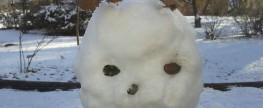 Schmelzet nicht, oh Innsbrucks Schneemänner-, frauen- und -kinder!