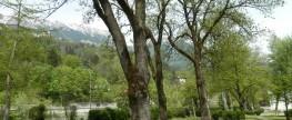 Bäume in der Stadt leben gefährlich