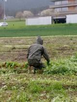 Regional ist relativ. Wer erntet das Tiroler Gemüse?
