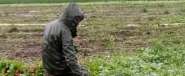 Regional, saisonal, unfair: Wer erntet das Tiroler Gemüse?