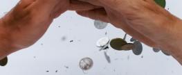 Alternative Ökonomien: Unterschiede und Gemeinsamkeiten