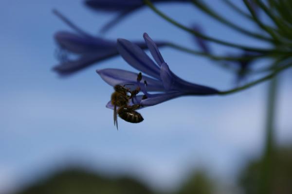 Biene, Mensch und Natur