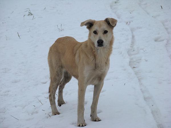 Tödliche Hundeköder in der Reichenau